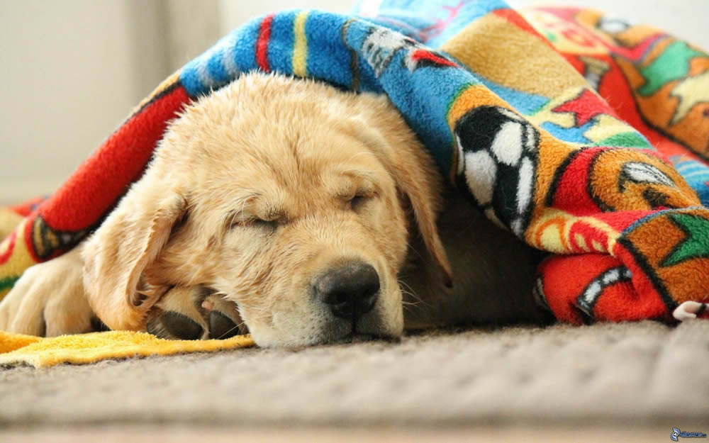 Echando una siestecilla