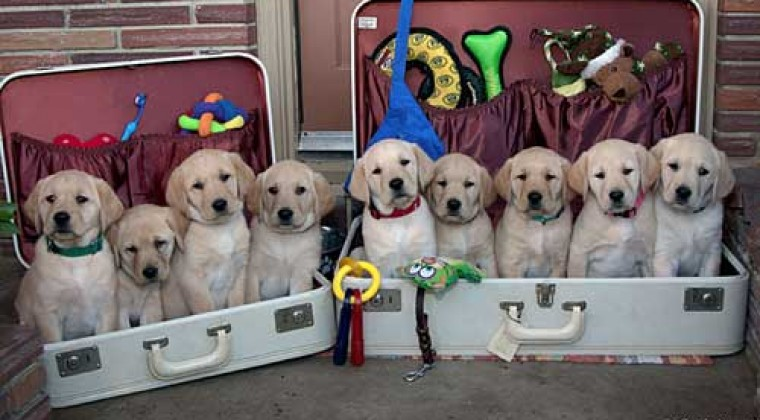 Perros en maleta